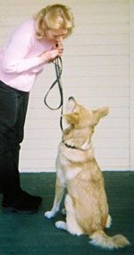 dog at attention with trainer